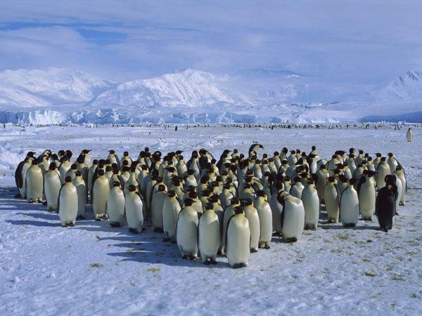 Animals___Under_water_Herd_of_penguins_058468_